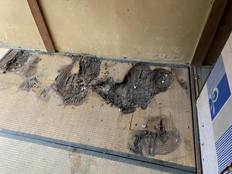 雨漏りで傷んだ畳