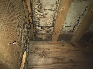 雨漏り調査で屋根裏を調査