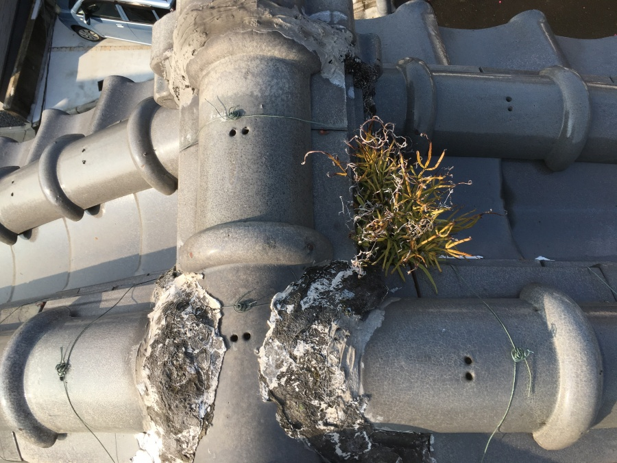 屋根瓦の漆喰剥がれと草が生えている様子