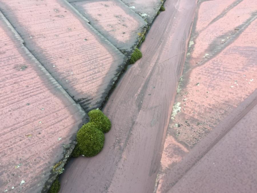 スレート屋根に長年の風雨による劣化で苔が発生