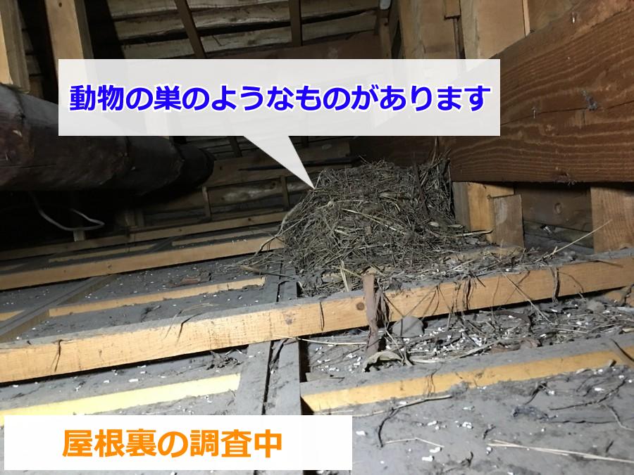 屋根裏に作られた動物の巣