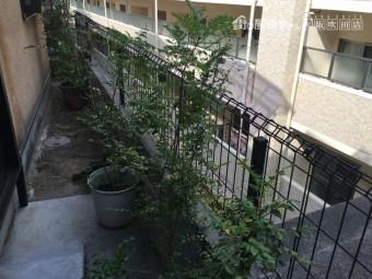 養生前のベランダ植物