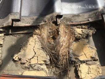 屋根に鳥の巣