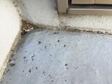 FRP防水劣化