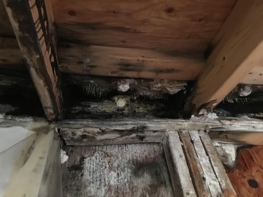 建物内部のカビ