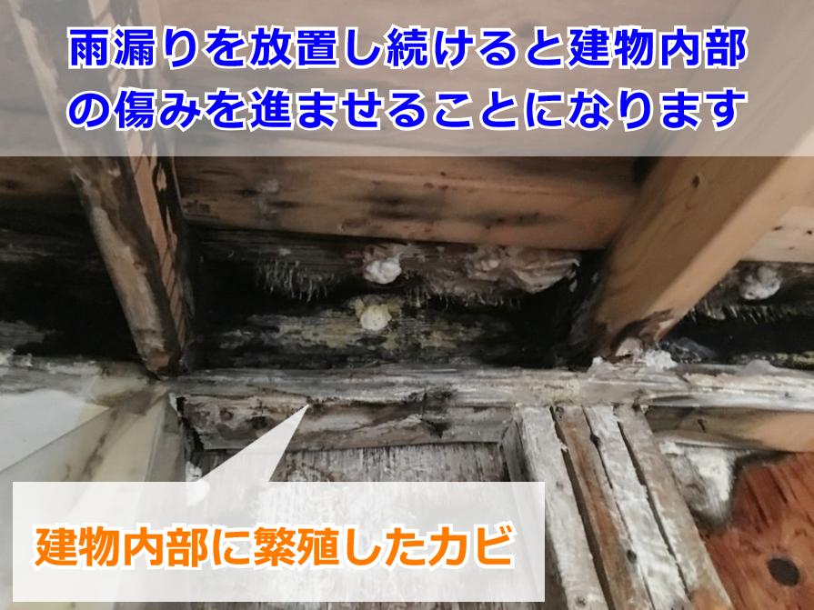 雨漏りによって繁殖した建物内部のカビ