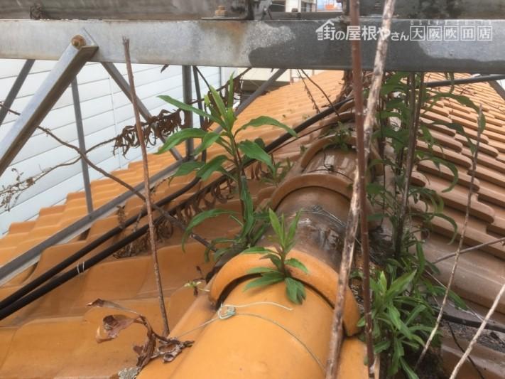 瓦屋根の間から雑草が生えている現場