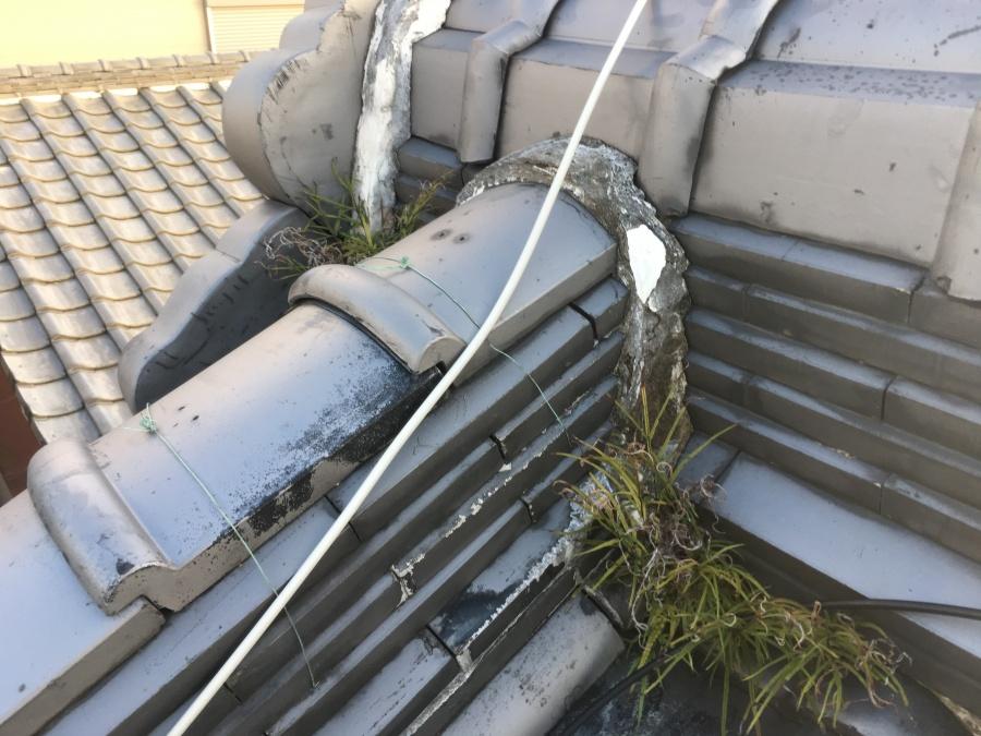 雑草の生えた瓦屋根