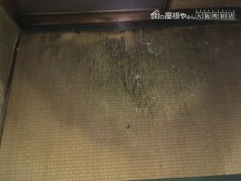 雨漏りにより劣化した畳