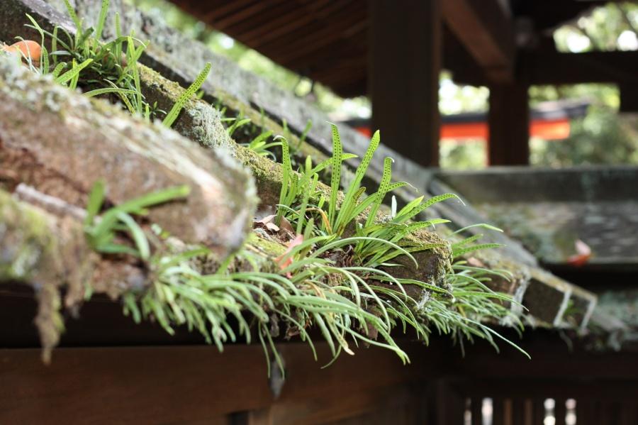 瓦屋根に雑草が生い茂っている様子
